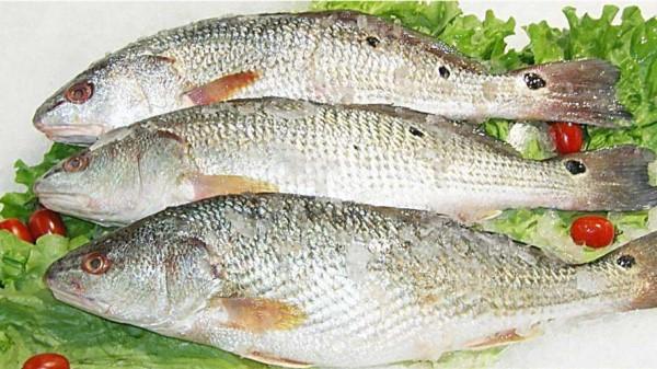 成都养老院经验分享:牢记!这6种食物千万别放在冰箱里(下)-鱼类