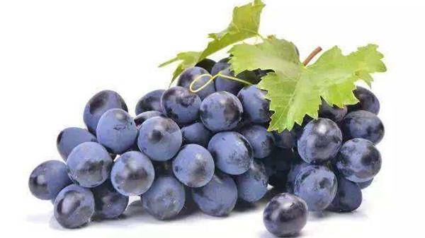 成都养老院一暄康养分享保健新宠——葡萄籽(三)2