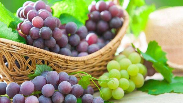 成都养老院一暄康养分享保健新宠——葡萄籽(二)2