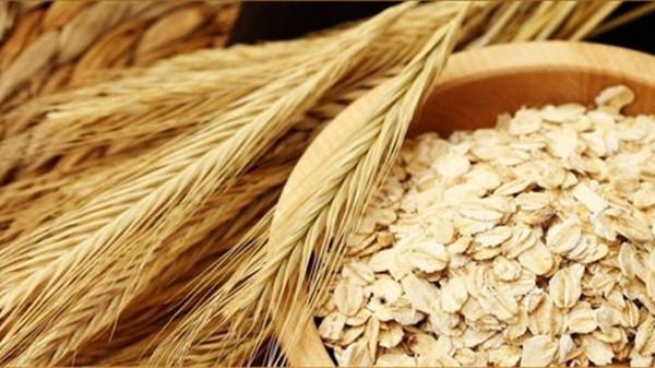 成都养老院一暄康养介绍老年人食补吃什么最好(一)-燕麦